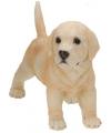 Stenen Labrador puppy 29 cm staand